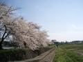 gorounuma6.jpg