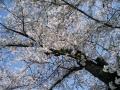 gourunuma1.jpg