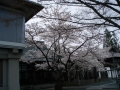 ryukokuji1.jpg