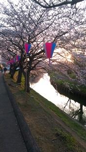 西船橋駅前整体院・カイロプラクティック・加圧トレーニング・201503桜02