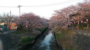 西船橋駅前整体院・カイロプラクティック・加圧トレーニング・201503桜03
