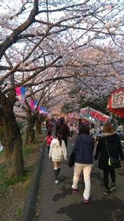 西船橋駅前整体院・カイロプラクティック・加圧トレーニング・201503桜04
