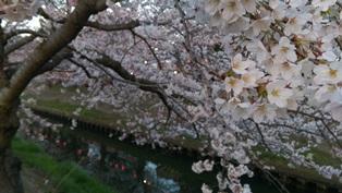 西船橋駅前整体院・カイロプラクティック・加圧トレーニング・201503桜06