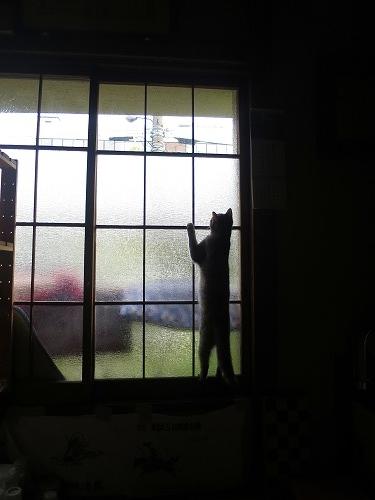 外が見たいまこたん1