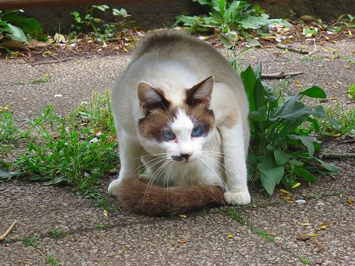 青い目の猫1