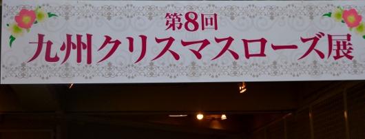 クリスマスローズ展