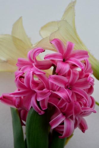 ヒヤシンスと造花