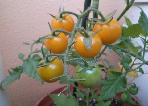 gardening465.jpg