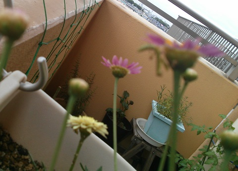 gardening468.jpg