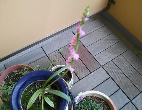 gardening472.jpg