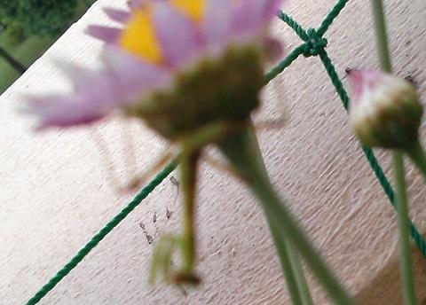 gardening473.jpg