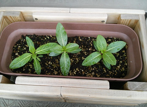 gardening489.jpg