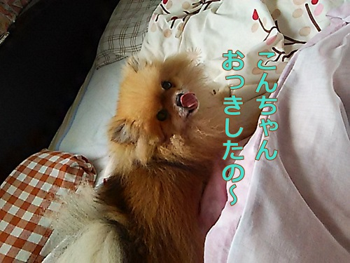 DSC_01330.jpg
