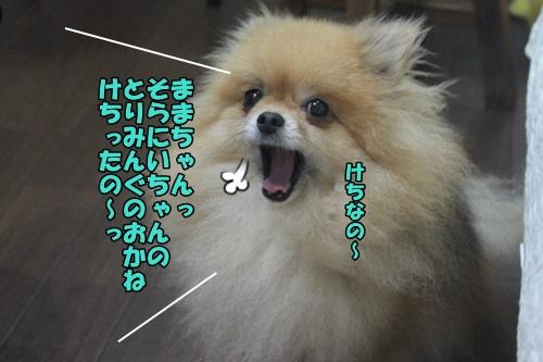 IMG_48170.jpg