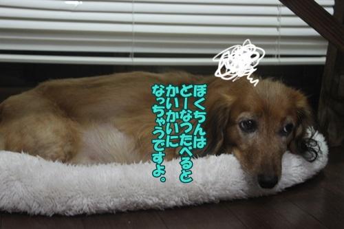IMG_48970.jpg