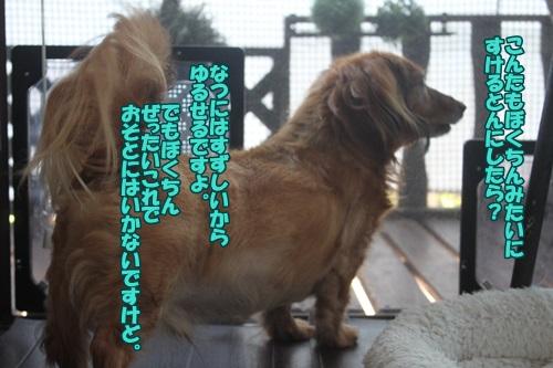 IMG_49800.jpg