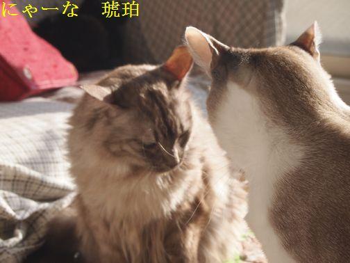 NYA-NAKOHAKU_20150125114610dbd.jpg