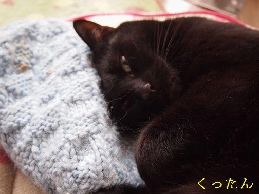 kuro_20150215141745515.jpg