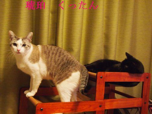 kurokohaku3_20150301111646eee.jpg