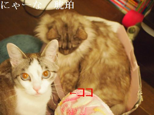 nya-nakohaku1_201503291209402d4.jpg
