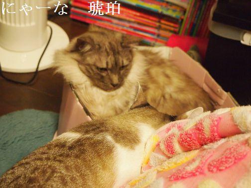 nya-nakohaku_20150329120929c3f.jpg