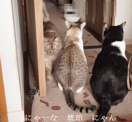 nyannnya-nakohaku_2014122812240481c.jpg