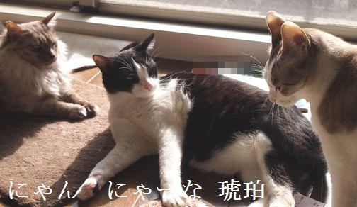 nyannnya-nakohaku_20150322185356da1.jpg
