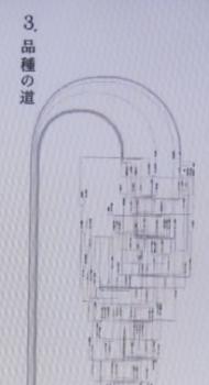 米の品種図
