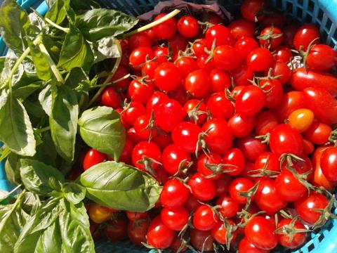 華やかトマト