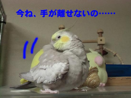 ガーン!!
