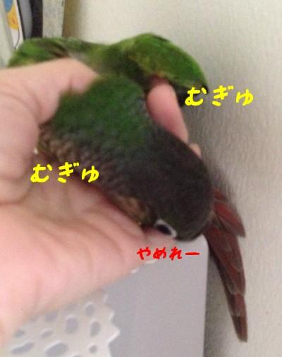 IMG_3382.jpg