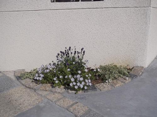 20150426東植栽