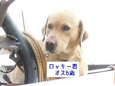 2014 11 29_2205S
