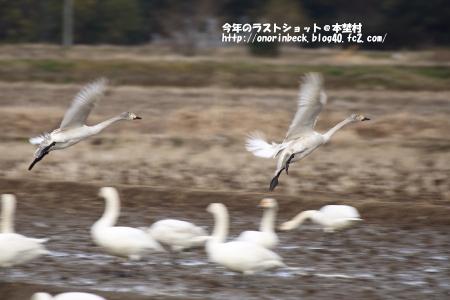 EOS6D_2015_03_07_9999_486.jpg