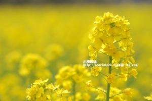 EOS6D_2015_03_18_9999_260.jpg