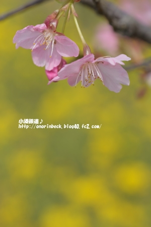 EOS6D_2015_03_18_9999_72.jpg