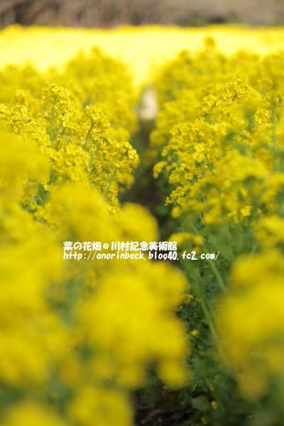 EOS6D_2015_03_21_9999_185.jpg