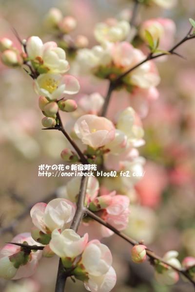 EOS6D_2015_03_22_9999_106.jpg