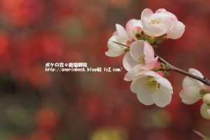 EOS6D_2015_03_22_9999_109.jpg