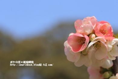 EOS6D_2015_03_22_9999_114.jpg