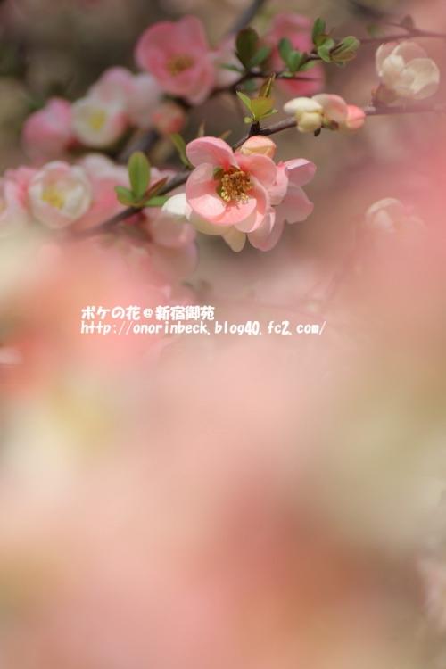 EOS6D_2015_03_22_9999_116.jpg