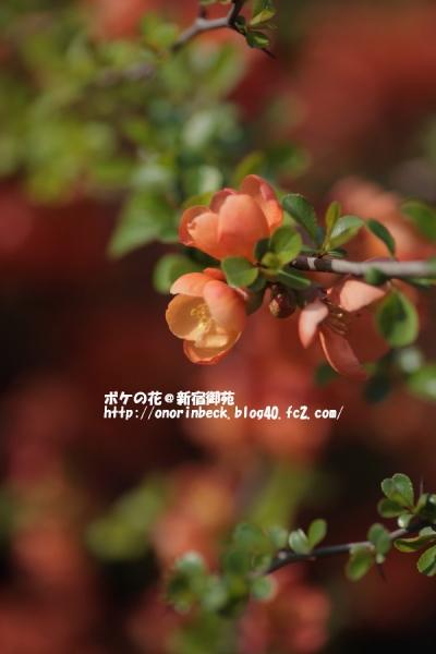 EOS6D_2015_03_22_9999_132.jpg