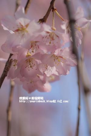 EOS6D_2015_03_22_9999_302.jpg