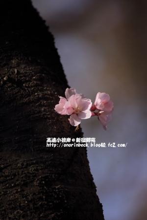 EOS6D_2015_03_22_9999_314.jpg