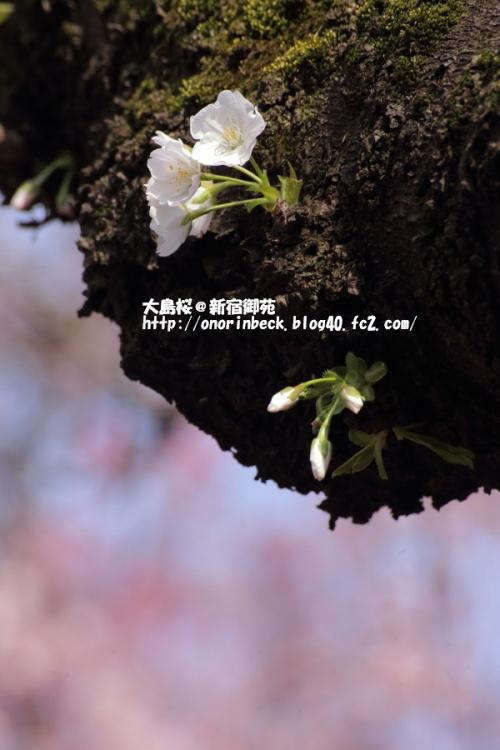 EOS6D_2015_03_22_9999_334.jpg