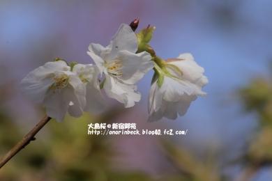 EOS6D_2015_03_22_9999_340.jpg