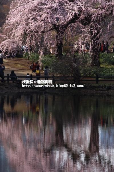 EOS6D_2015_03_22_9999_395.jpg