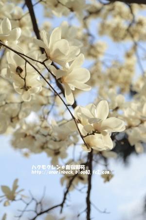 EOS6D_2015_03_22_9999_442.jpg