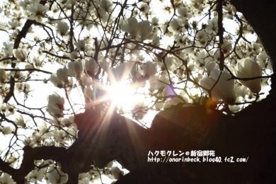 EOS6D_2015_03_22_9999_8.jpg