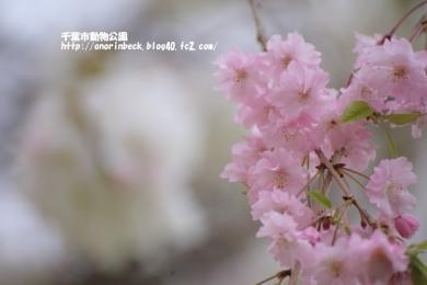 EOS6D_2015_04_04_9999_75.jpg